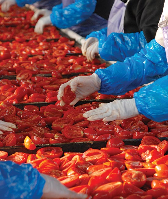 sorting quality tomatoes before drying